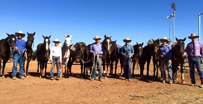 2015 Cloncurry Stockmans Challenge, lineup of Marnie's progeny competing.