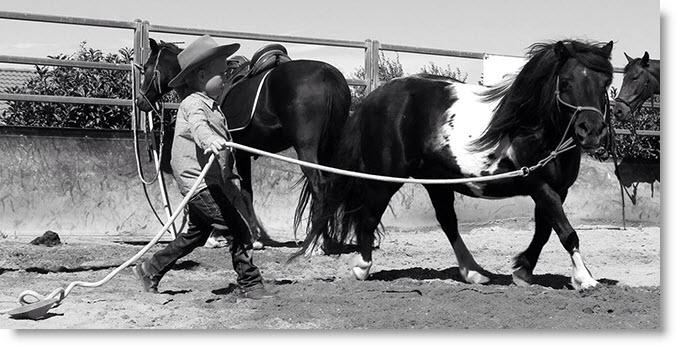 A keen student at Steven Hart's Horsemanship Clinic