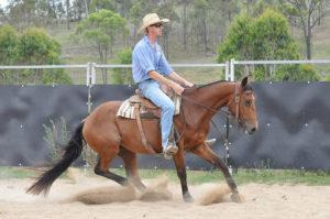Luke Bennett working on the sale horses.
