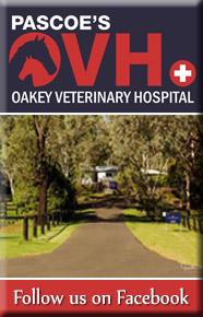 Pascoes Oakey Vet Clinic