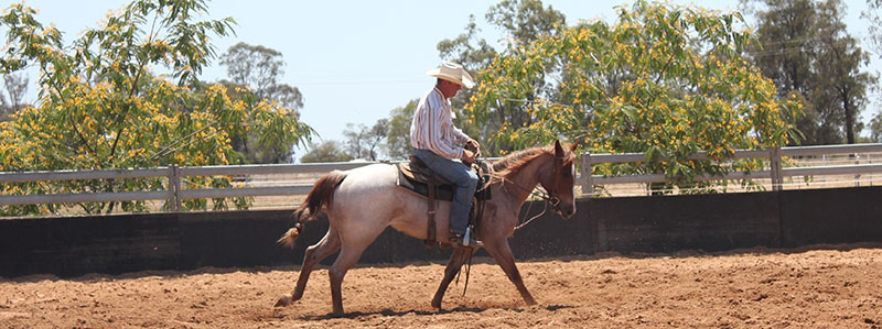 Steve Smith Horse Breaking